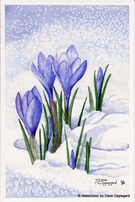 Spring Crocus   Watercolor Art by Dave Oppegard