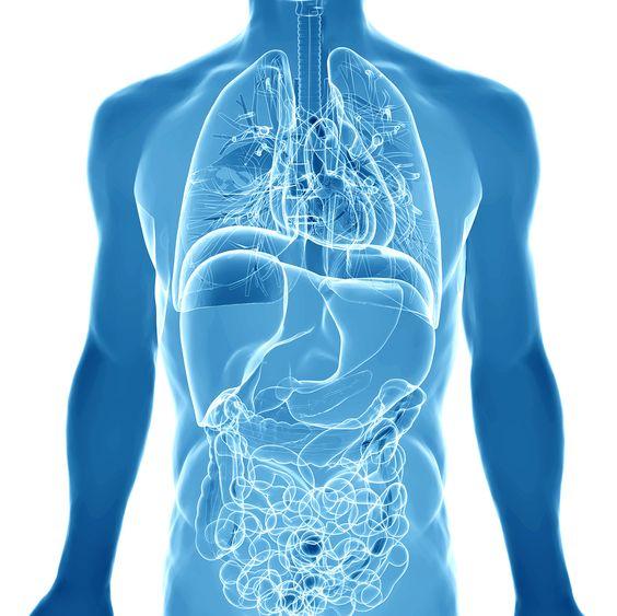 Human Body diagram with Alkaline