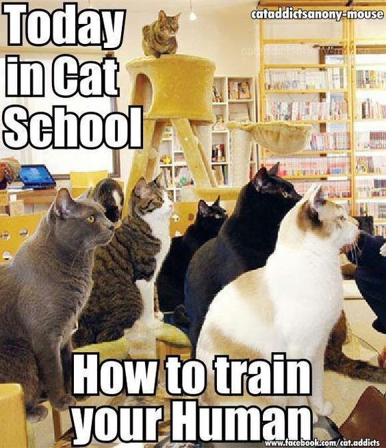 Cats, Schools and How to train your on Pinterest