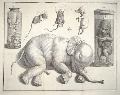 """Lámina de """"Locupletissimi Rerum Naturalium Thesauri"""" (1734) del Gabinete de Curiosidades del naturalista y farmaceutico Albertus Seba. Dicho Gabinete se encontraba entre los más completos, espectaculares y extensos del mundo y fue registrado minuciosamente en un catálogo ilustrado de cuatro grandes volúmenes."""