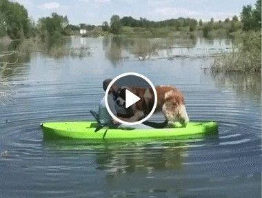 Cachorro dando uma volta de barco