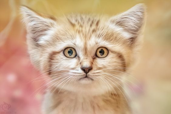 Cats - Children's eyes by Manuela Kulpa on 500px