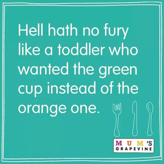 Hahaha soooo true!! Hell hath no fury like a toddler who wanted the green cup instead of the orange one.: