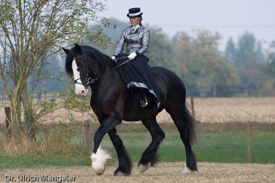 shire horses | Rasseportrait Shire Horse in Haldern