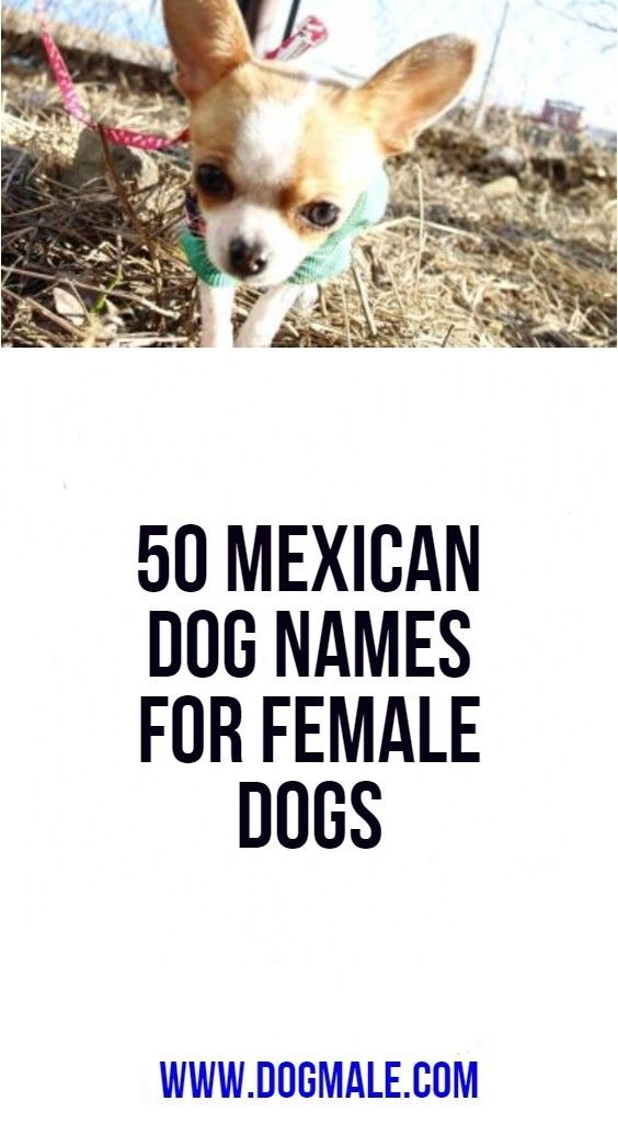 50 Mexican Dog Names For Female Dogs Female Dog Names Dog Names Puppies Names Female