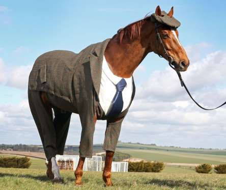 Sir Anthony McCoy and veteran race horse Morestead unveil world's first authentic Harris Tweed suit ... - William Hill commission world's first Harris Tweed suit for a racehorse, Berkshire, Britain - 13 Mar...