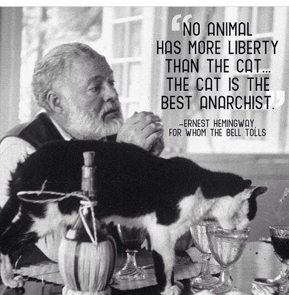 Hemingway lived cats and they are still on the premises