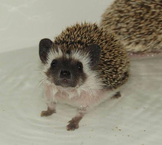 bath time!: