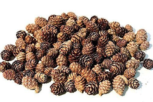 Floral Fantacy Spruce Pine Cones Vase Fillers Brown Pine Cones Table Scatter Natural Crafts 8-Ounce