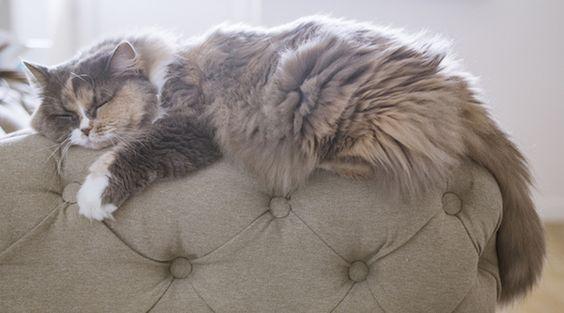 Life-Changing Pet Hair