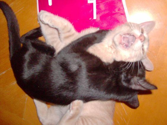 My kitties! Stella and Moxie