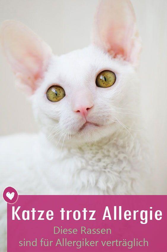 Diese Katzen Sind Fur Allergiker Geeignet Katzen Katzenallergie Und Katzen Fur Allergiker