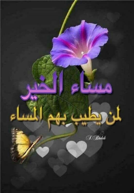 مساء الخير Evening Greetings Good Morning My Friend Good Evening