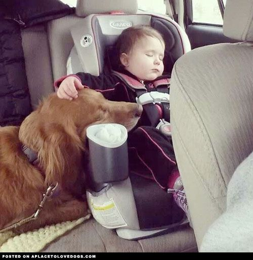 golden-retriever-and-baby-sleeping: