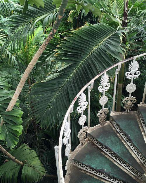 "thomasdanthony: ""Stairway to Heaven 🌿 (at Kew Garden Botanical Gardens) """