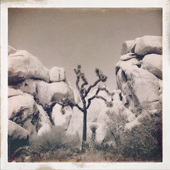 A joshua tree @ 'The Hall of Horrors' in the dead of the 100-degree heat. Joshua Tree National Park, California