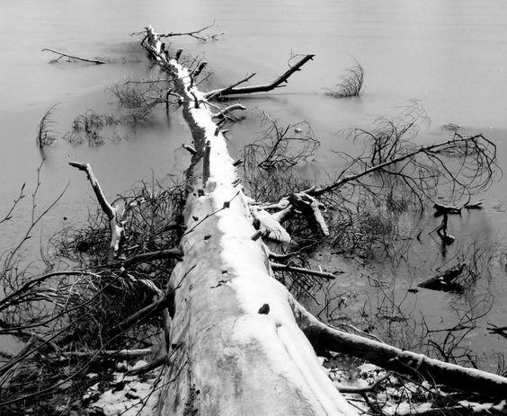 1-dead-tree-in-ice.jpg (1200×986)