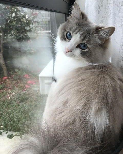 Cute Cats 3 Image By Jessica In 2020 Sopoimmat Elaimet Kissanpennut Hauskat Elaimet