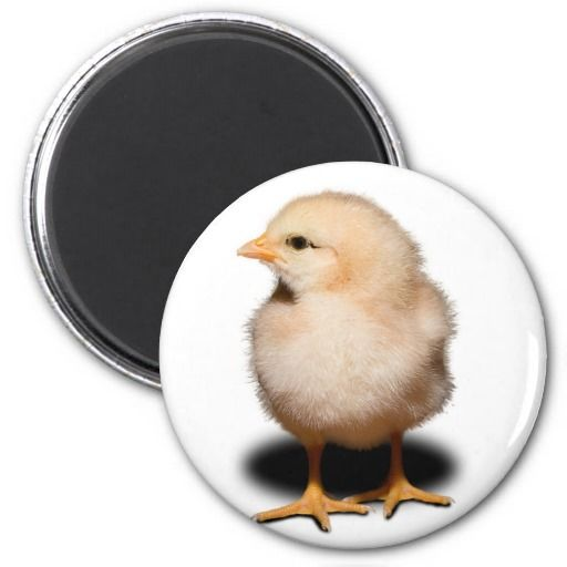 Chick Magnet Yes I can say you are on right site we just collected best shopping store that haveReview          Chick Magnet Review on the This website by click the button below...