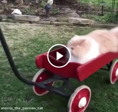 Partiu dar um passeio de carro com papai