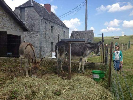 Visite des fermes