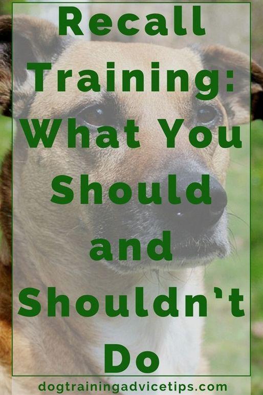 Dog Training Door Manners Dog Training Utah County Dog Training