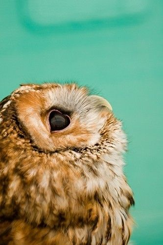 What are you dreaming about, little owl?