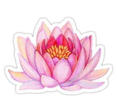 Pink Lotus Flower Sticker Lotus Flower Art Lotus Art