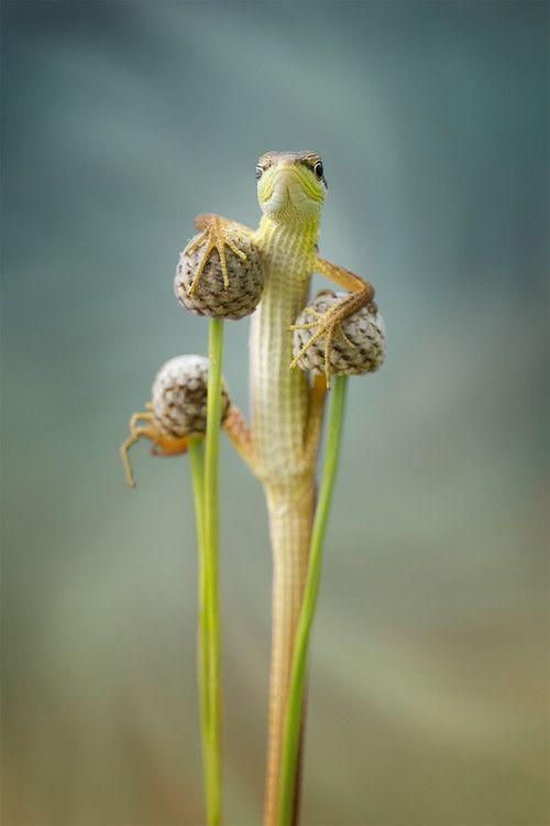 thelordismylightandmysalvation:  lizard my hero by  Hendy Mp