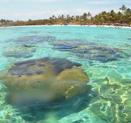 Corales y aguas cristalinas en Morrocoy,Venezuela.