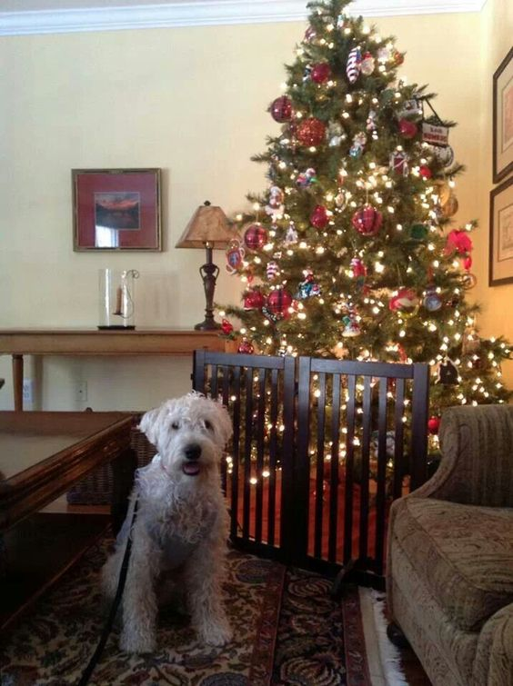 LOL I love the gate protecting the tree.  . . cute doggie:
