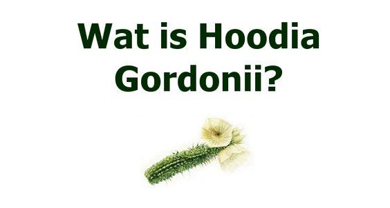 Hoodia Gordonii is een natuurlijke eetlustremmer. Lees meer over deze bijzondere super food! http://totalbodywellness.nl/afvallen/wat-hoodia-gordonii/