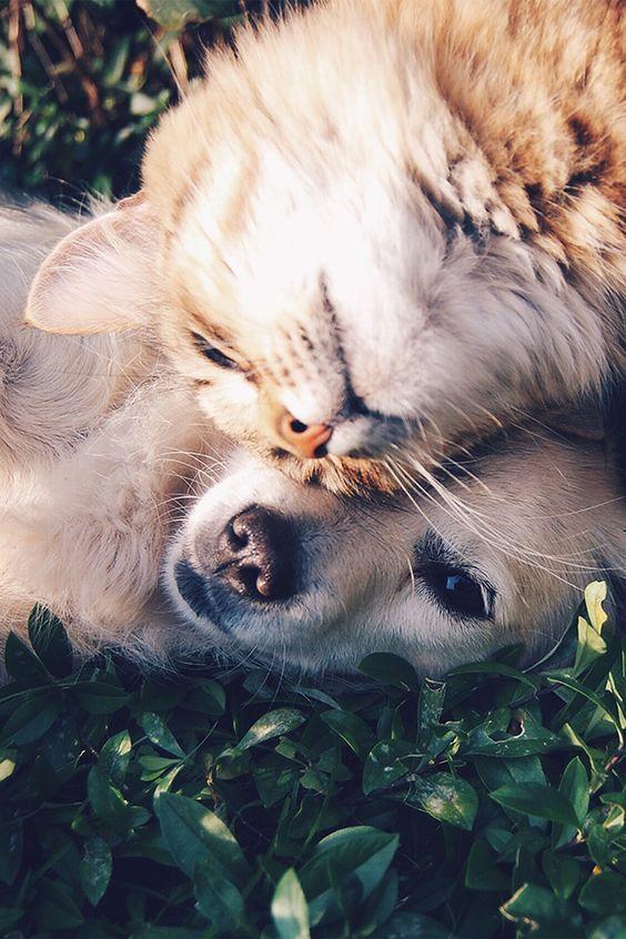 FreeiOS7 - nf34-cat-and-dog-animal-love-nature-pure - http://bit.ly/29K6yvz - freeios7.com