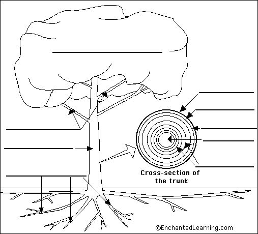 Tree anatomy printable | Trees - Books/ Crafts | Pinterest ...