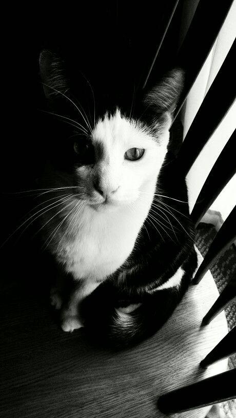 Marley/Saca'Mouse