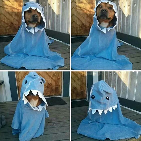 For all #dog owners out there, please get this #halloween #costume and post some pics!