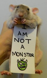 Some people don't like rats, but they're very clean and intelligent animals. This sign says it all. :-)