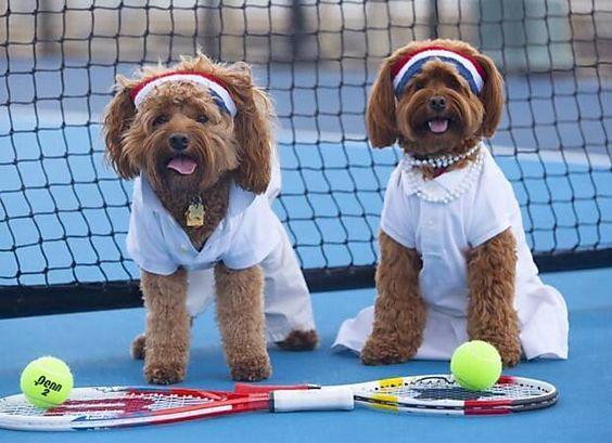 Cães aderem ao espírito olímpico e aparecem vestidos como atletas nas redes sociais   Bom Pra Cachorro