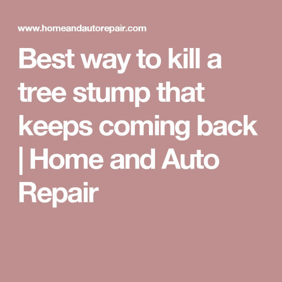 Best way to kill a tree stump that keeps coming back | Home and Auto Repair