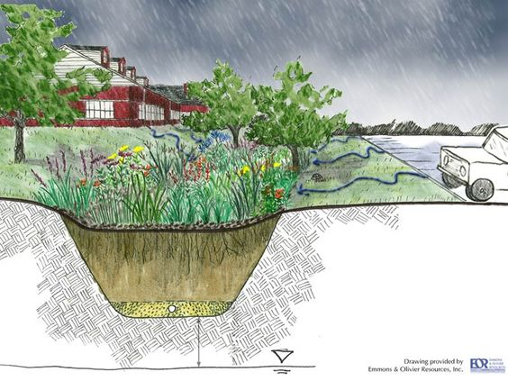 rain garden cross section: