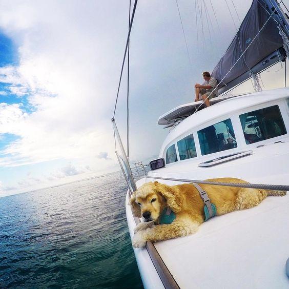 """Hey @westmarineinc Starboard Bow Lookout Hastings needs new binoculars!! #westmarine #dogdaysofsummer #lagooncatamaran"""