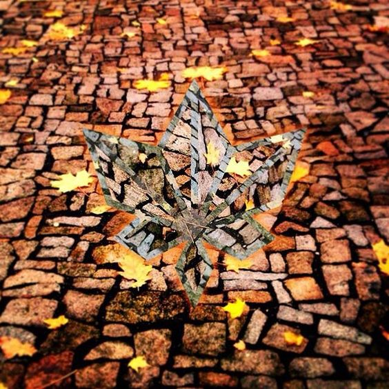 Edit by @marek_zivny  #fragmentapp  Love how this simple Fragment edit wonderfully captures the spirit of the autumn season! by fragmentapp