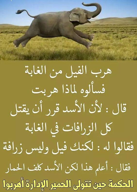 حكمة مؤثرة هروب الفيل من الغابه Funny Arabic Quotes Arabic Quotes Wisdom Quotes Life