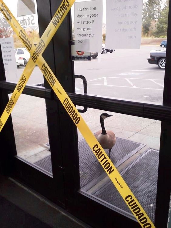 Sign says not to use door, or goose will attack you!: