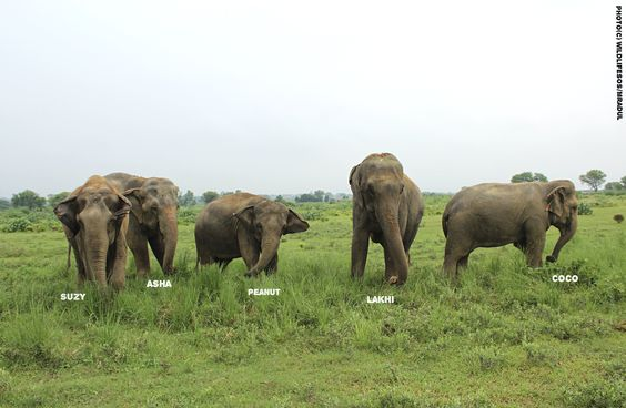 ‪#‎PictureOfTheDay‬! The girls paused to pose for a picture while out on their evening walk at the ‪#‎ElephantConservationandCareCenter‬, Mathura!: