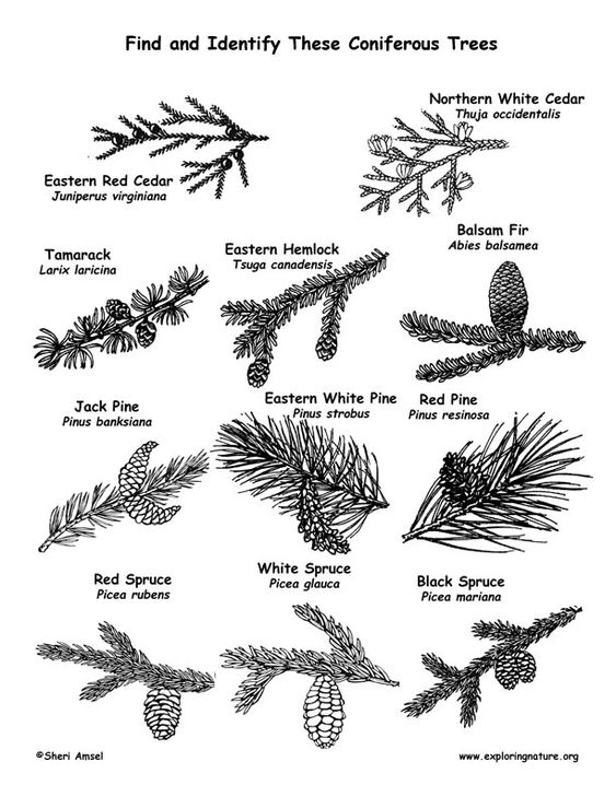 plant identification coloring pages - photo#3