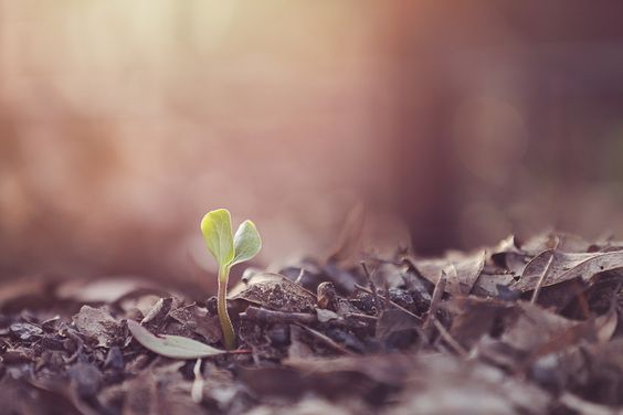 New Life by Sarah Van Dyck - Moore on 500px