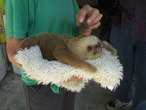 sloth on a cloth