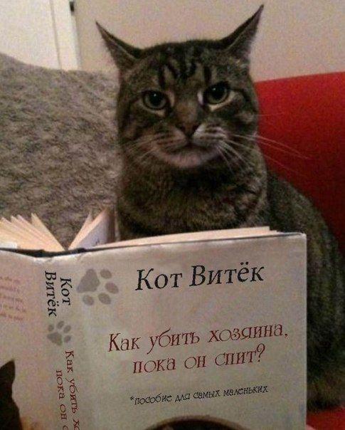 Cat Tube Samye Smeshnye Koty Zdes Stranica 42 Memy