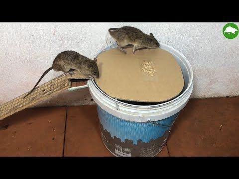 71f9aef4f80a0a682db1a54958c18aae - How To Get Rid Of Mice In Compost Bin